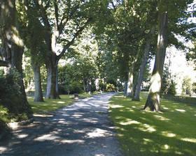 L'allée des chênes © Ville d'Angers - Cliché Direction Parcs, Jardins et Paysages. Lydia Foucher.