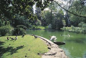 Jardin des Plantes, bassin aux cygnes © Ville d'Angers. Cliché Jean-Noël Sortant.