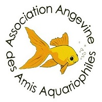Logo ASSOCIATION ANGEVINE DES AMIS AQUARIOPHILES