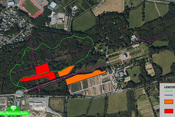Programme de coupe rase de peuplements de châtaigniers au parc de Pignerolle