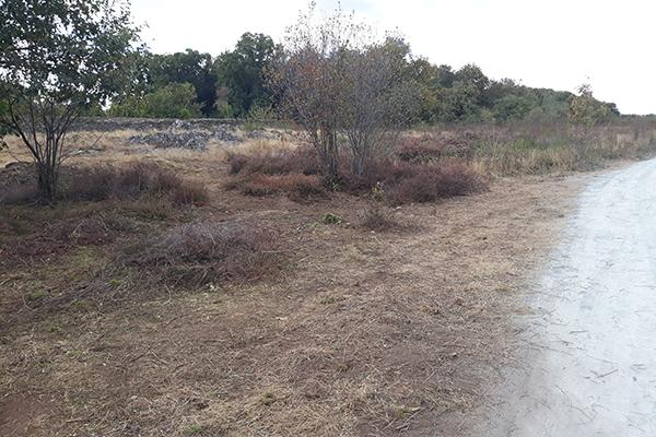 Renaturation des landes de Bruyères, parcs Saint-Nicolas