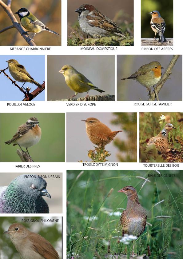 Les oiseaux for Les oiseaux des jardins