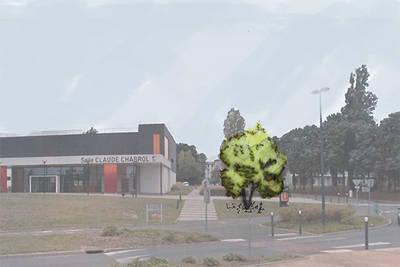 """Plantation de 45 """"arbres signaux"""" sur Angers en 2019"""