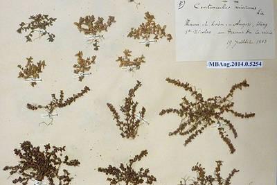 Plus de 60000 planches de l'herbier du muséum seront numérisées