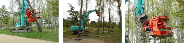 Abattage d'arbres en fin de vie au parc du lac de Maine