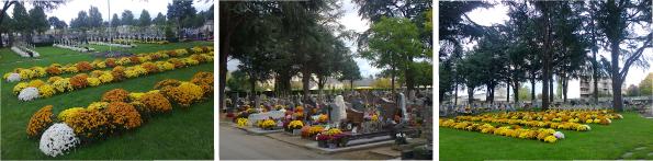 Fleurissement des cimetières pour les fêtes de la Toussaint