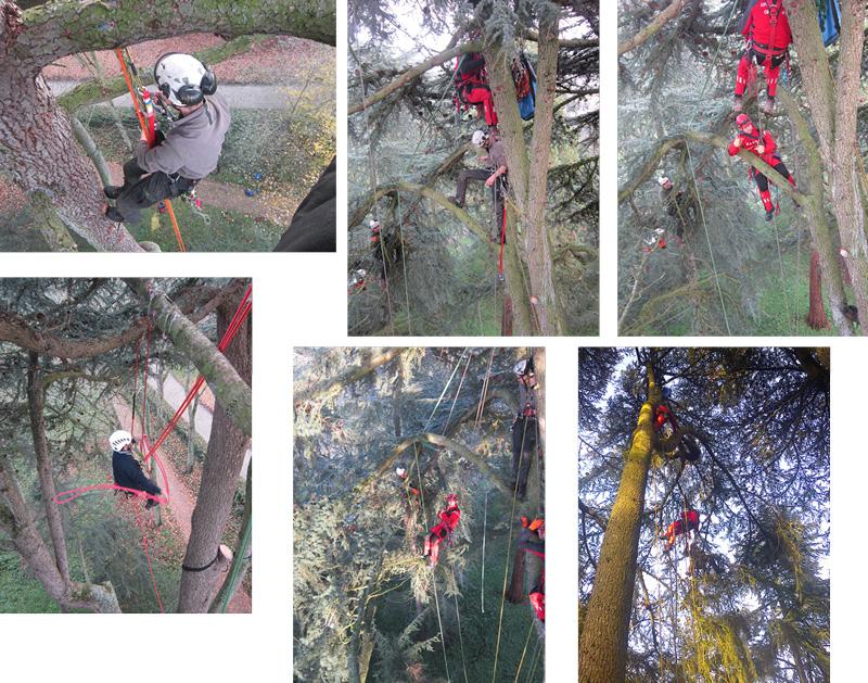 Exercice de secourisme dans les arbres, par les pompiers du Groupe de Reconnaissance et d'Intervention en Milieu Périlleux.