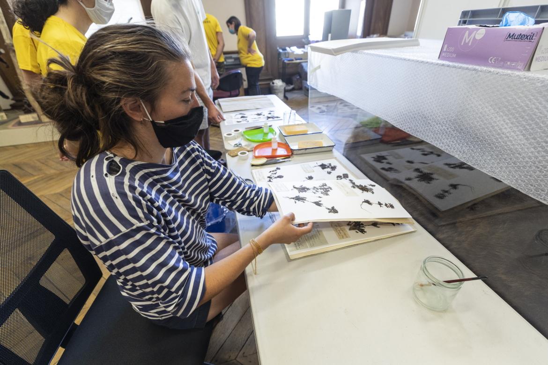 Photo de l'inventaire participatit au muséum des sciences naturelles.