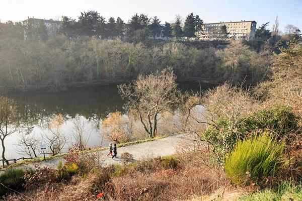 Châtaigniers malades: un chantier de recépage démarre au parc Saint-Nicolas