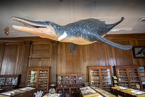 Ses 5 mètres de long et sa mâchoire de 1 mètre faisaient de Vorax un redoutable prédateur marin.