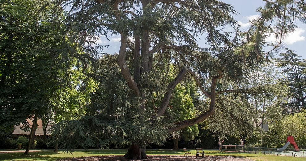 L'arbre en ville, pour quoi faire ?