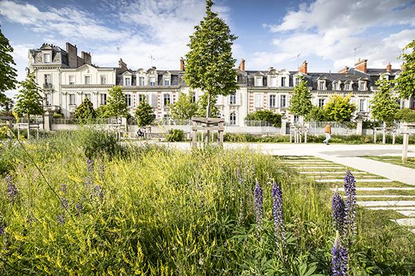 Photo de la végétalisation allée Jeanne-d'Arc