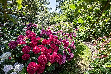 Visite de l'Arboretum et de la maison Gaston-Allard