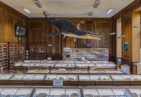 Muséum des sciences naturelles