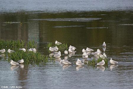 Découverte des oiseaux d'eau et de leur environnement