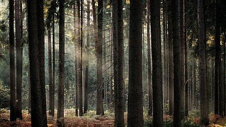 Sortie pédestre : ce que les arbres racontent des Hommes