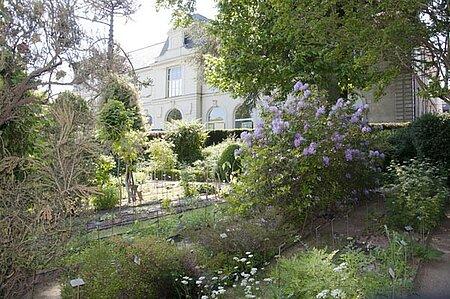 Visite commentée du jardin botanique de la faculté de Santé d'Angers