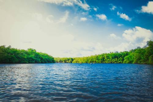 Visite guidée du patrimoine végétal du Lac de Maine