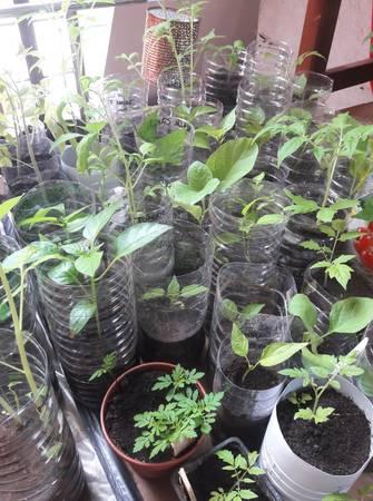 T'as des plants ? Partage de plantes potagères