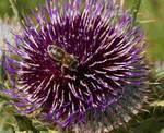 Image Rencontre avec un apiculteur