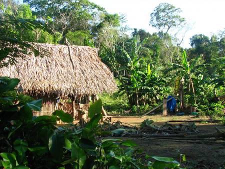 Écouter et faire parler la forêt : les Amérindiens d'Amazonie et leur environnement