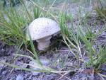 Image Balade à la découverte des champignons