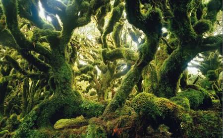 La forêt, une communauté vivante