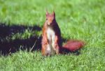 Image Sortie Des écureuils au lac de Maine