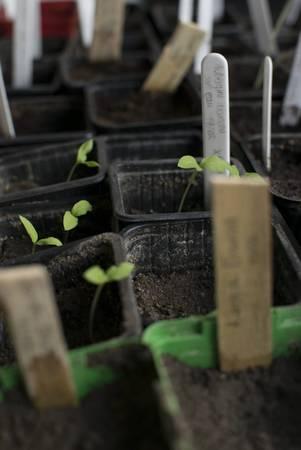 Atelier Jardinage au naturel
