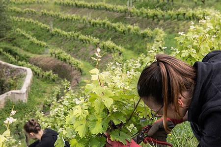 Ateliers taille de la vigne et dégustation à l'abbaye Saint-Nicolas