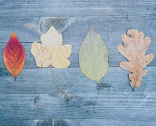 Des feuilles et des arbres