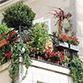 """Image Les inscriptions pour le concours """"fleurissons Angers"""" sont ouvertes"""