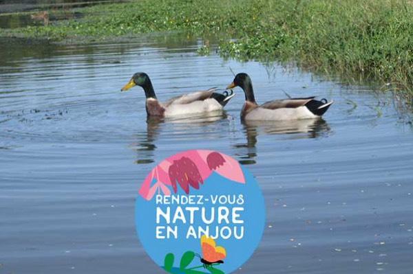 Confluence et biodiversité à bord d'un kayak