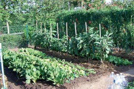 Le B.A-BA de la permaculture