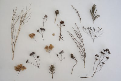 "Création d'un herbier photosensible ""cyanotype"""
