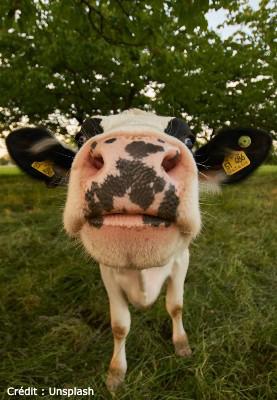 Vis ma vie à la ferme