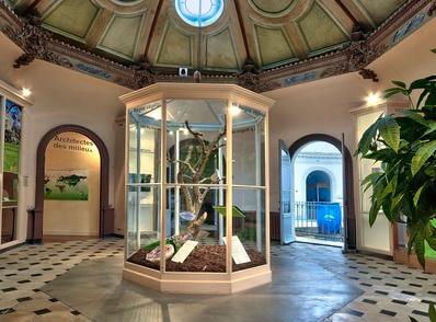 Visite du muséum des sciences naturelles
