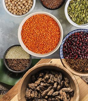 Les protéines alternatives